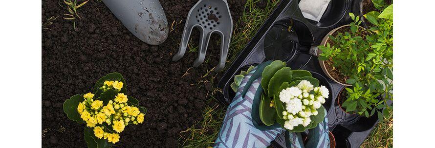 8 Βήματα για να ανθίσει κήπος σας την Άνοιξη!